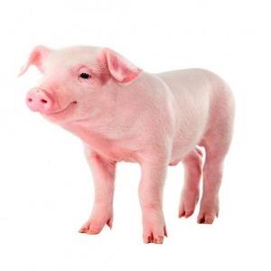 Tyneside-Nutrition-Pig-300×300